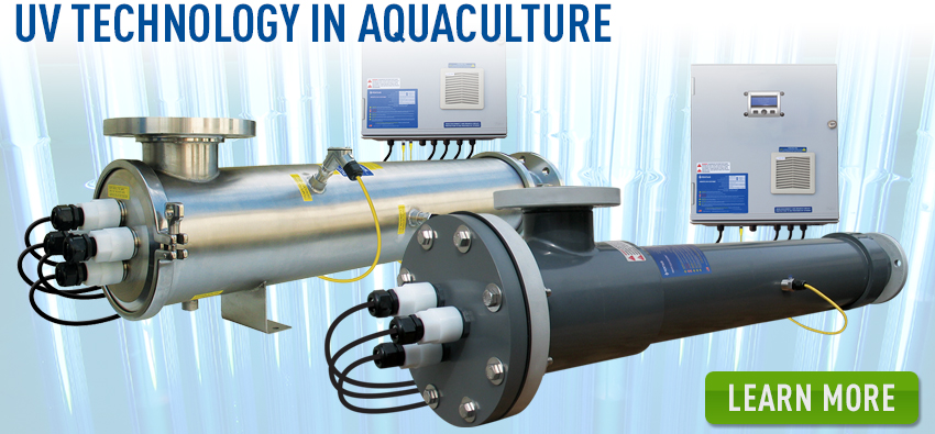 UV Technology in Aquaculture