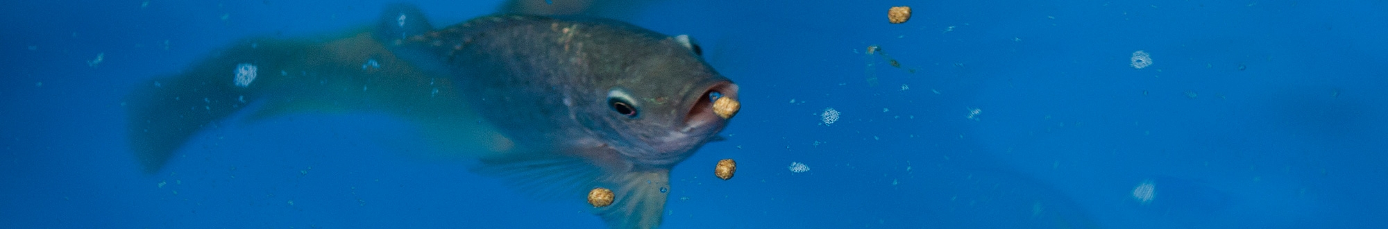 Aquatic Feed & Feeders