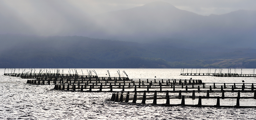 South Australia's Aquaculture