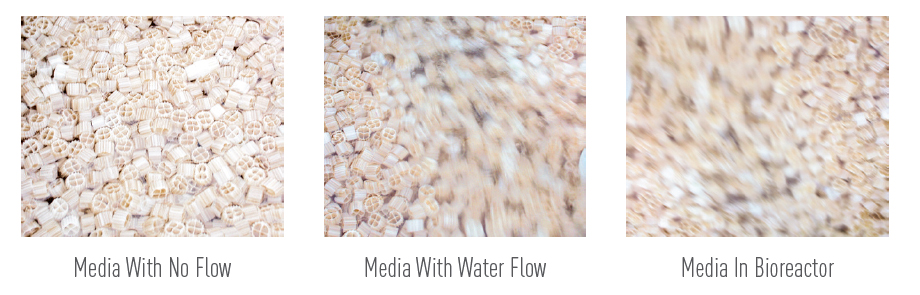 Sweetwater SWX Bio-Media