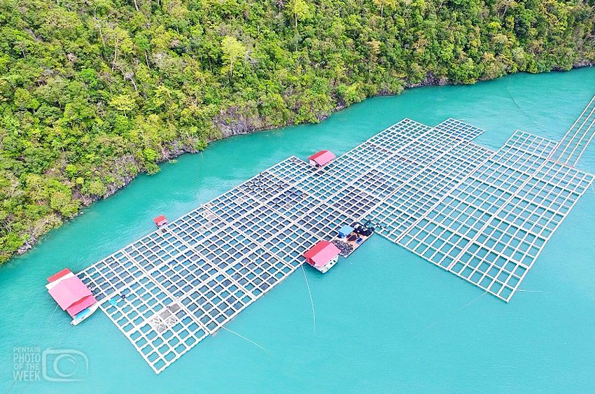 Pentair - Grouper Farm Malaysia