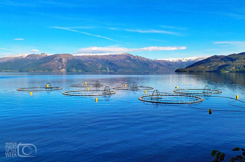 Fish Farming - Norway