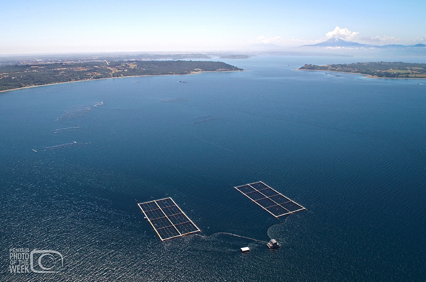 Pentair Fish Farm - Chile