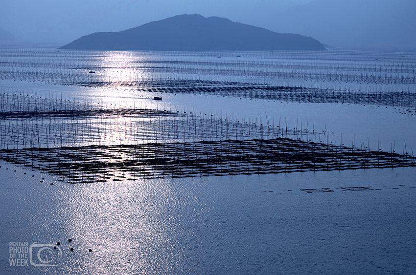 Fish Farming in Asia