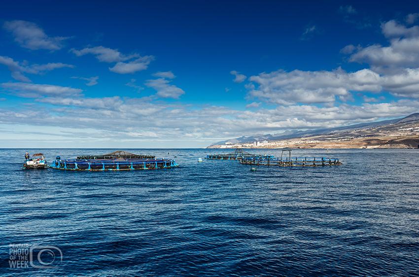 Fish Farming - Spain