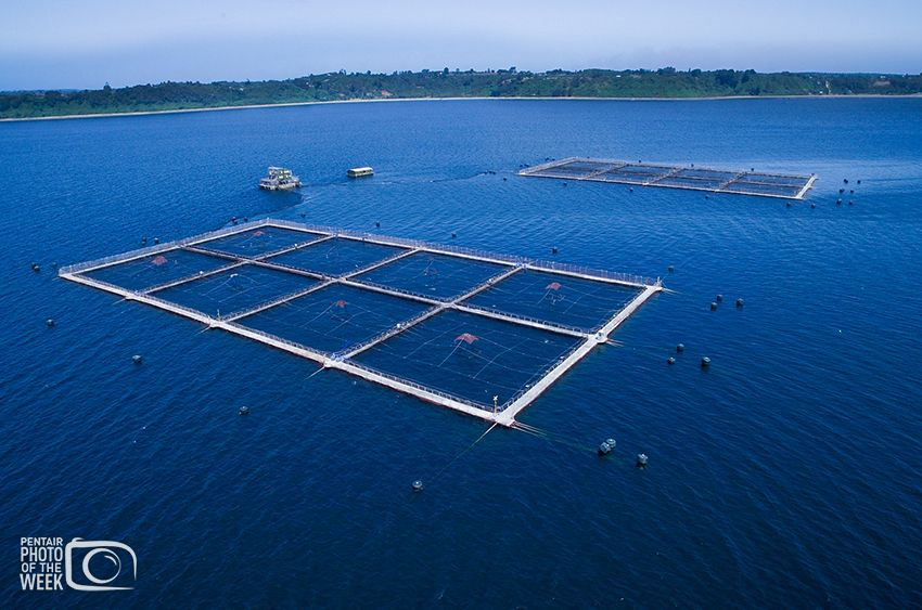 Pentair - Chile Salmon Farm