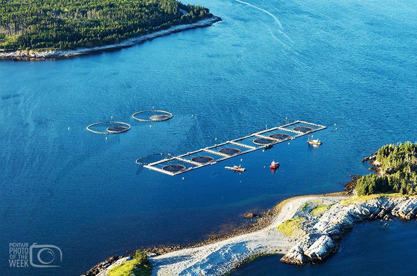Aquaculture Fish Farm Canada