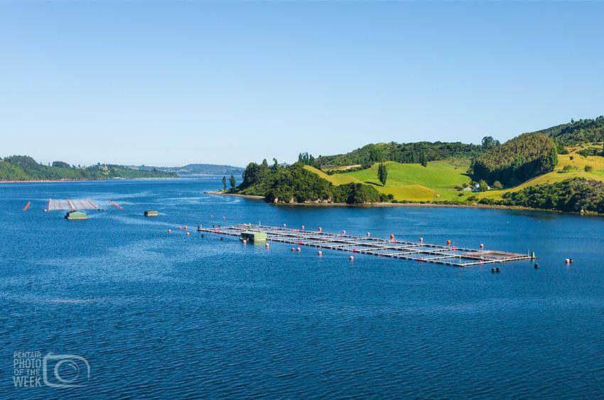 Pentair AES - Chile Fish Farming - Salmon