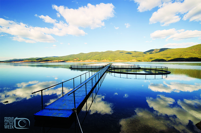 Fish Farming - Bulgaria Trout