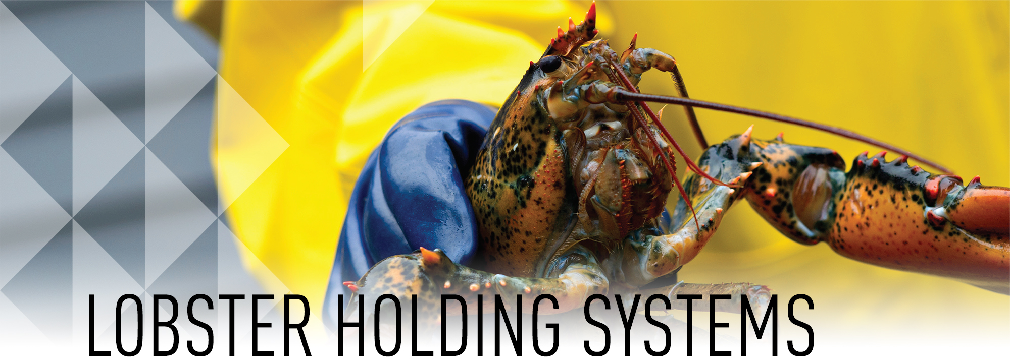 Lobster Holding Systems
