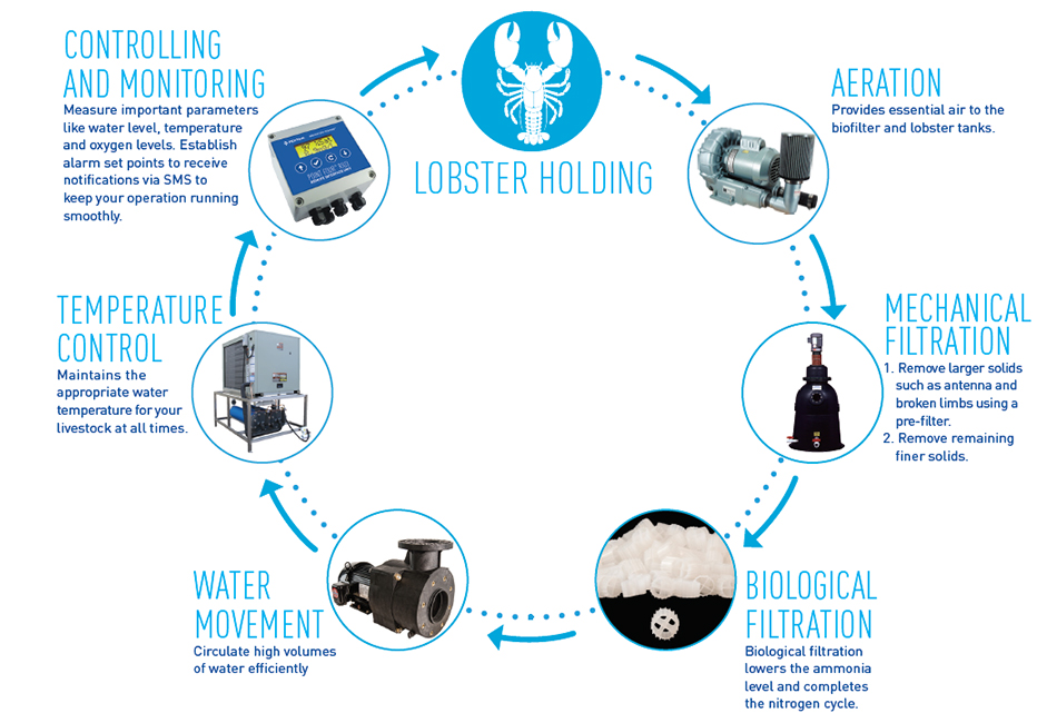 Lobster Holding Systems Cycle